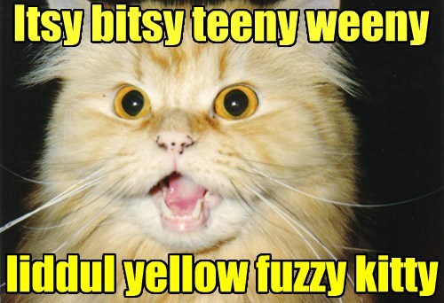Itsy bitsy teeny weeny liddul yellow fuzzy kitty