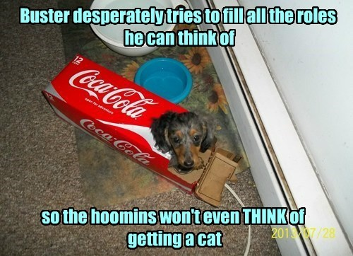 dogs box Cats funny - 7733295872