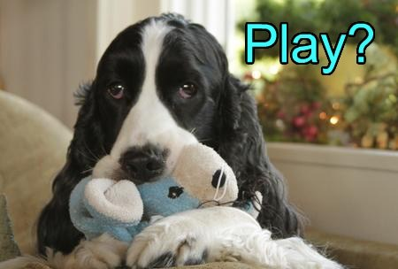toy cute play - 7733422848