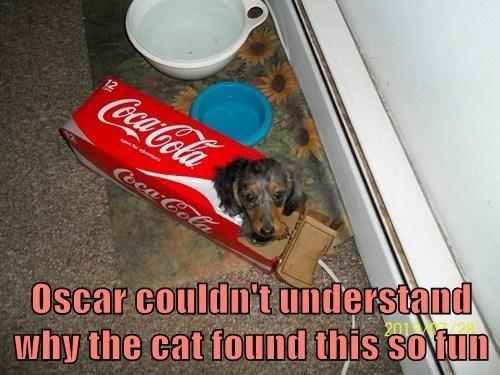 cat nip dogs box Cats funny - 7733624576