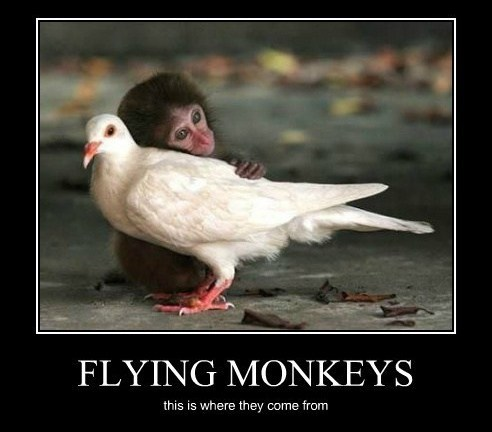 monkeys,funny,unnatural love,flying
