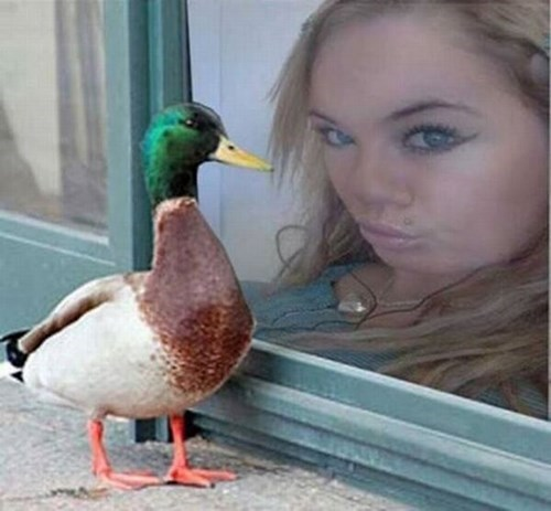 duck lips duck wwib poorly dressed g rated - 7734262272