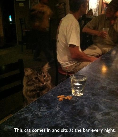 bar drinking funny Cats - 7734415104