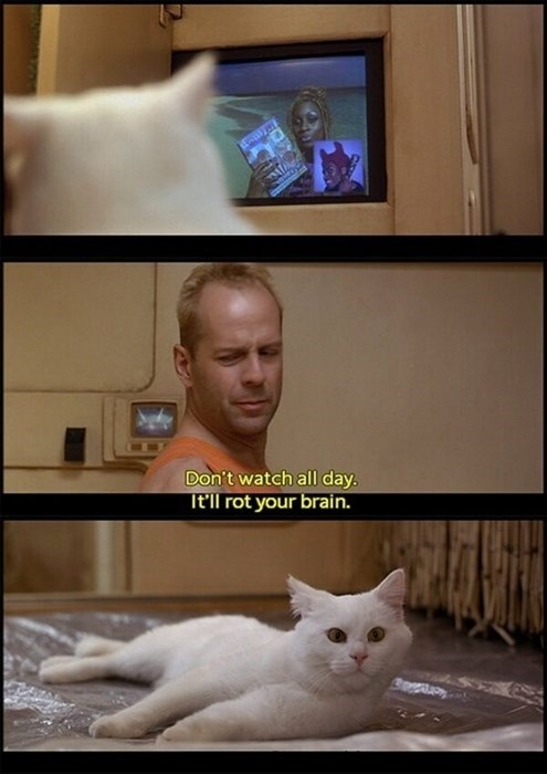 cat fifth element scifi bruce willis TV