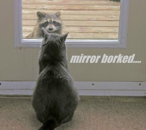 mirror borked....