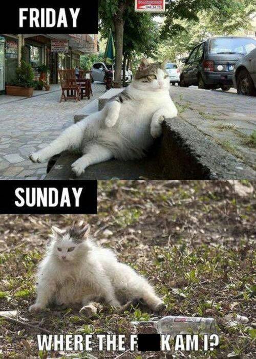 cat drunk crunk critters funny - 7734626048