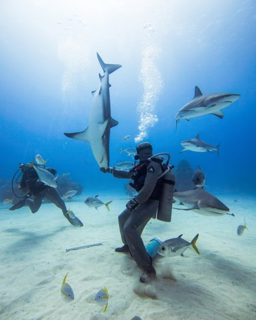scuba,shark,BAMF,funny