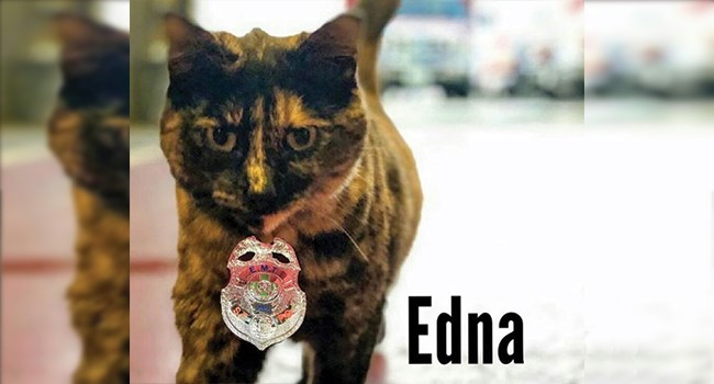 edna cute adopted story fire department Cats - 7734789