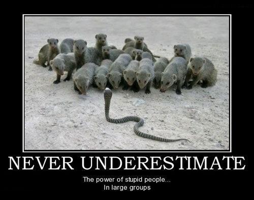 idiots funny animals snake - 7734911744