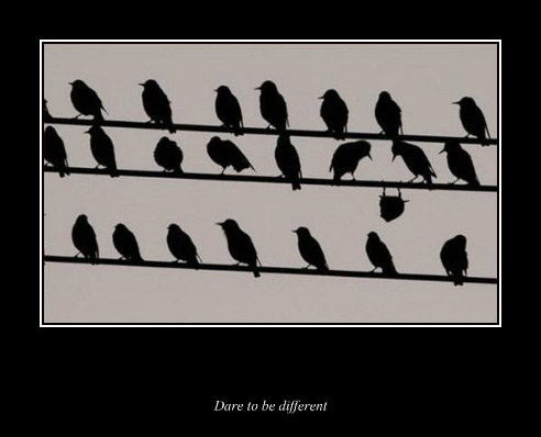 birds different funny - 7735001088