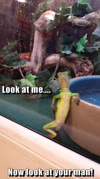 old spice lizard funny - 7735282432