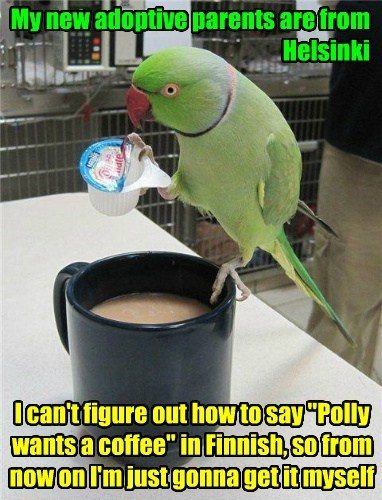 birds,modern,coffee