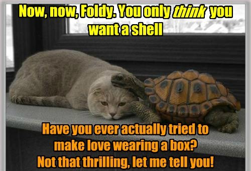 turtles shell Cats funny - 7735463424