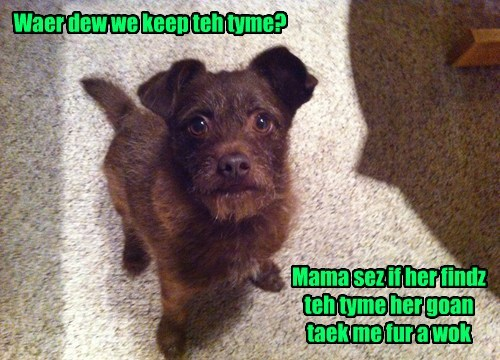 pun walk thyme funny - 7736390912