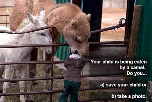 kids wut animals - 7736409856
