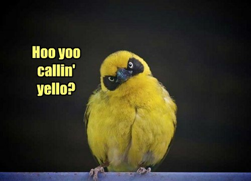 yellow,bird,funny
