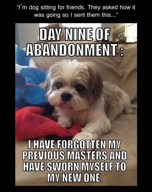 abandoned dog sitting funny - 7736493568