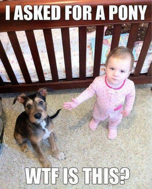 dogs kids pony parenting funny - 7736502016