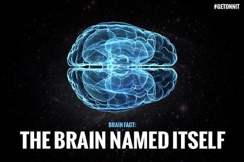 brain science perspective funny - 7736511744