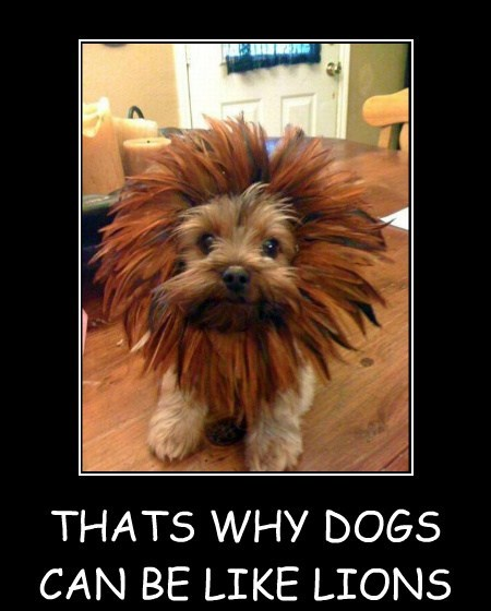 THATS WHY DOGS CAN BE LIKE LIONS WAT? Y YA SO SCARED? I JUST WANNA HUG :(