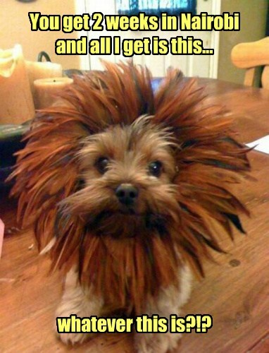 T.Shirt lion funny - 7736806912