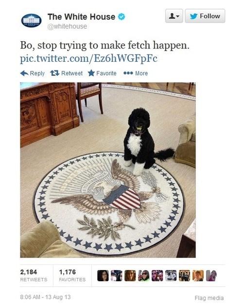 twitter White house mean girls - 7736813312
