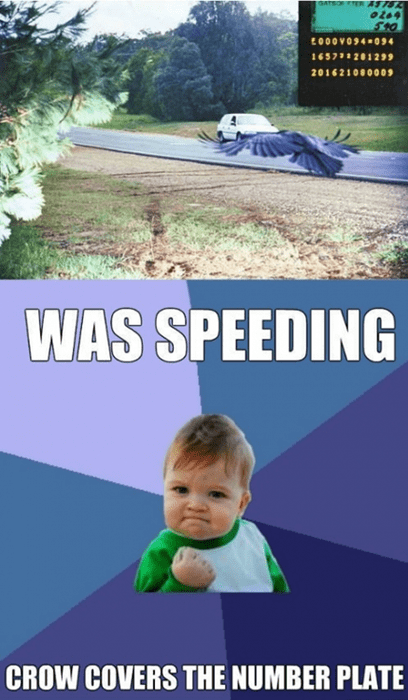 driving Memes success kid animals americana - 7736853504