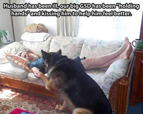 dogs heartwarming cute ill German Shepard