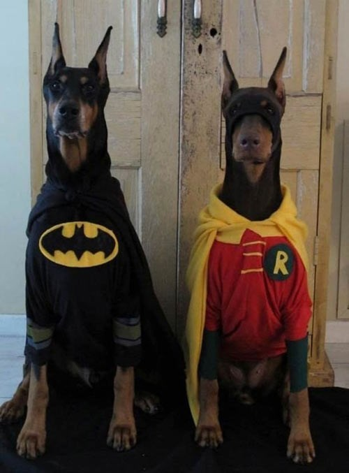 costume batman funny - 7736910080