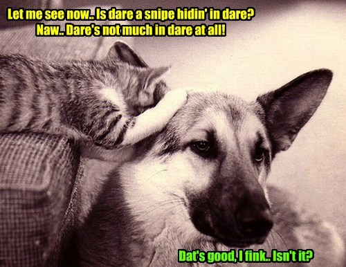 dogs snipe Cats funny - 7737089024