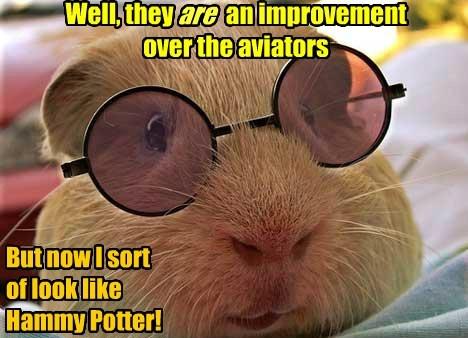 Harry Potter glasses guinea pig funny - 7737105664