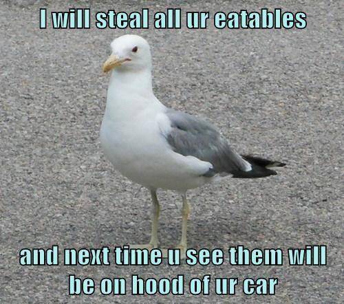 poop seagulls food funny - 7737137664