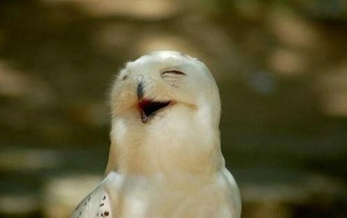 Owl - 7737311744