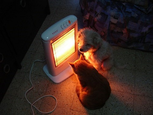 dogs,warmth,Cats