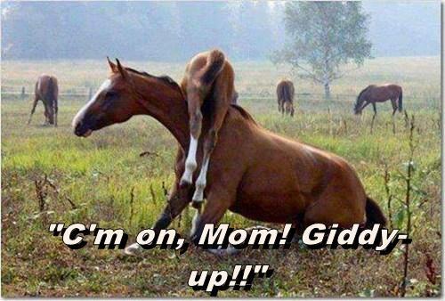 giddyup funny horse - 7737556480
