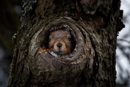 cozy,squirrel,tree