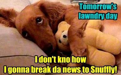 teddy bear laundry day funny - 7740830208