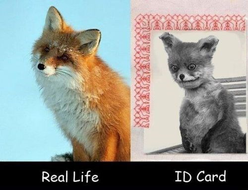 IDs,animals,DMV