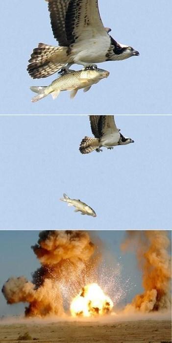 bombs wtf birds fish funny - 7740924928