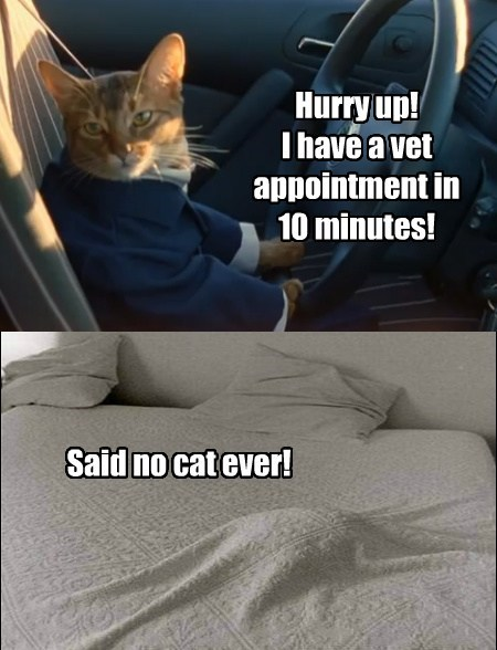 sad but true appointments Cats funny - 7740936960