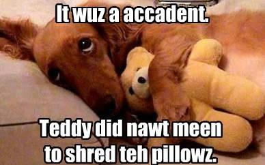teddy bear cute trouble - 7740939520