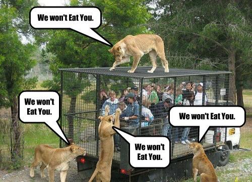 lions,lying,puns,funny