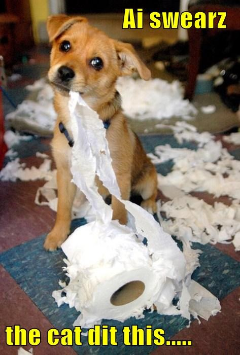 puppy toilet paper mess - 7742312192