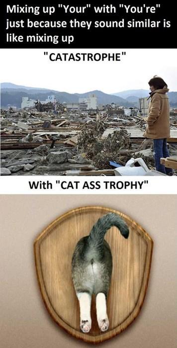 catastrophe puns homophones - 7742363392