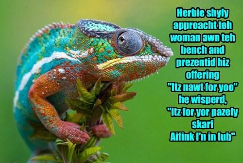 scarf,chameleon,love,funny