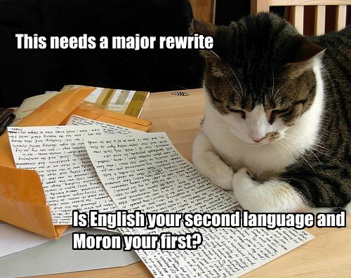 editor kitteh has a critical lolcats lol cat memes funny