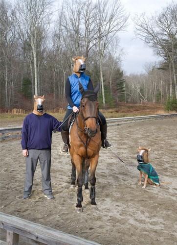 wtf,horse masks,horses,funny