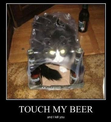 beer cat wtf dangerous funny - 7742581248