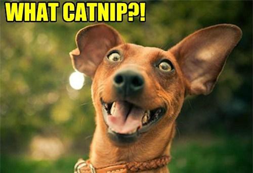 catnip trouble funny - 7742586368