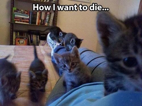 kitten snuggles die funny - 7742618368